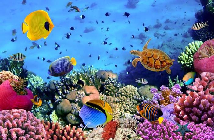 Australie Grande barrière de corail