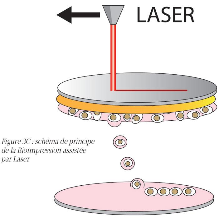 chema-de-principe-de-la-bioimpression-assistee-par-laser