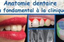 Anatomie-dentaire